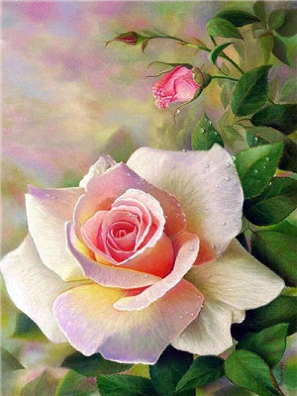 20 Pulgadas QIAOYUE Light Rose Paint by Numbers DIY Kit de Pintura para Adultos y ni/ños Principiantes Lienzo preimpreso decoraci/ón del hogar 16 sin Marco