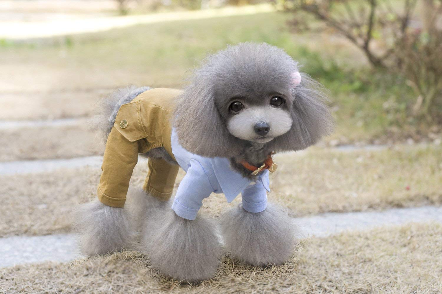 bluee S bluee S Doggy Costume Pet Clothes Teddy Four-Legged Pants Braided Straps British Pants (color   bluee, Size   M) Pet Dog Clothes (color   bluee, Size   S)