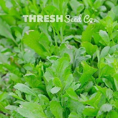 Garden Cress - 300Seeds : Garden & Outdoor