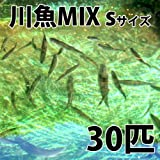 【生体】川魚MIX Sサイズ 2cm~4cm前後 30匹 エサ用 生餌 川魚 淡水魚