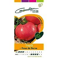 Gondian 512453 CP 3 Semences Tomate Rose de Berne Rouge 1 x 8,1 x 16 cm