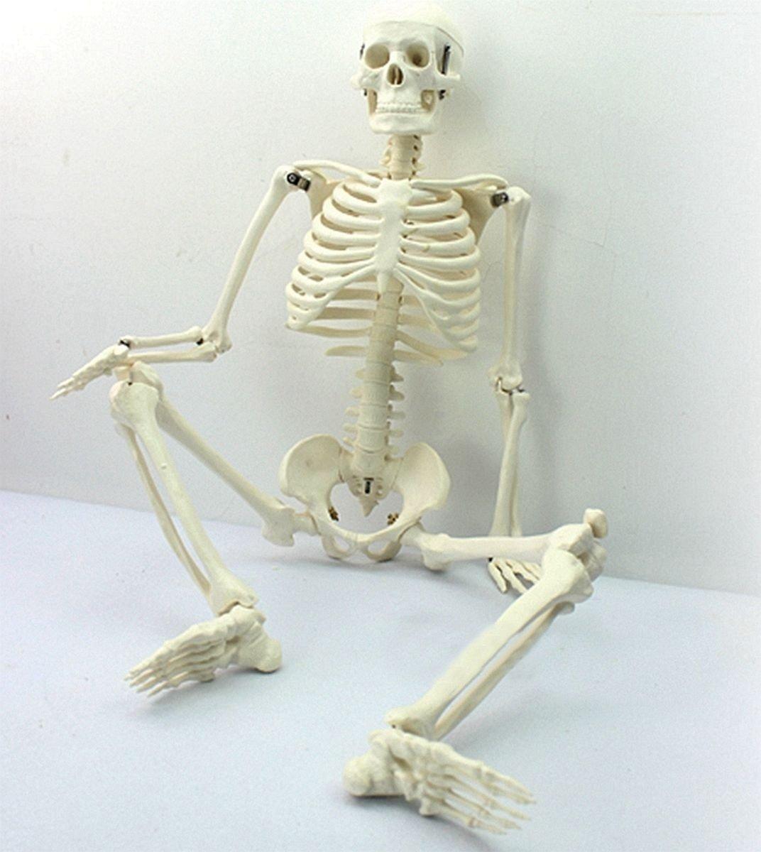 Hanbaili Anatomisches Menschliches Skelett F/ür Die Lehre Fexibel,45cm
