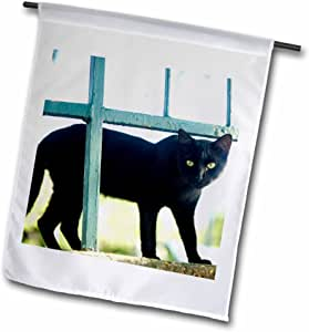 Danita Delimont Cats Mirante Do Pasmato Park Rio De