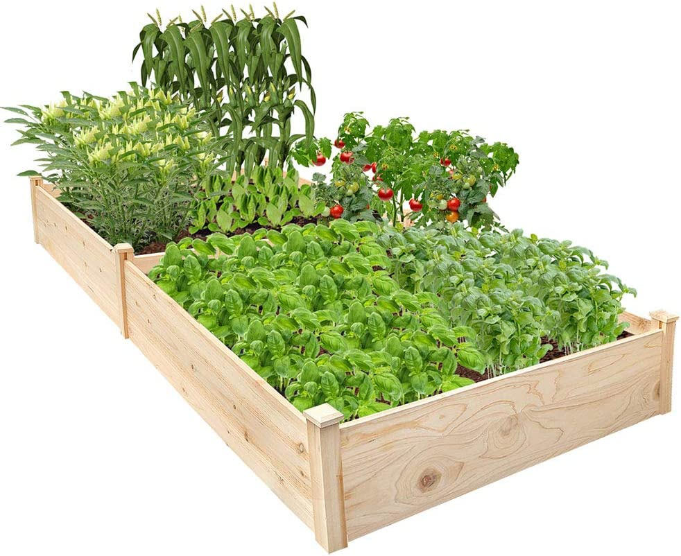 Raised Garden Bed 8 x 4 Planter Box Natural Wood Garden Box for Vegetables