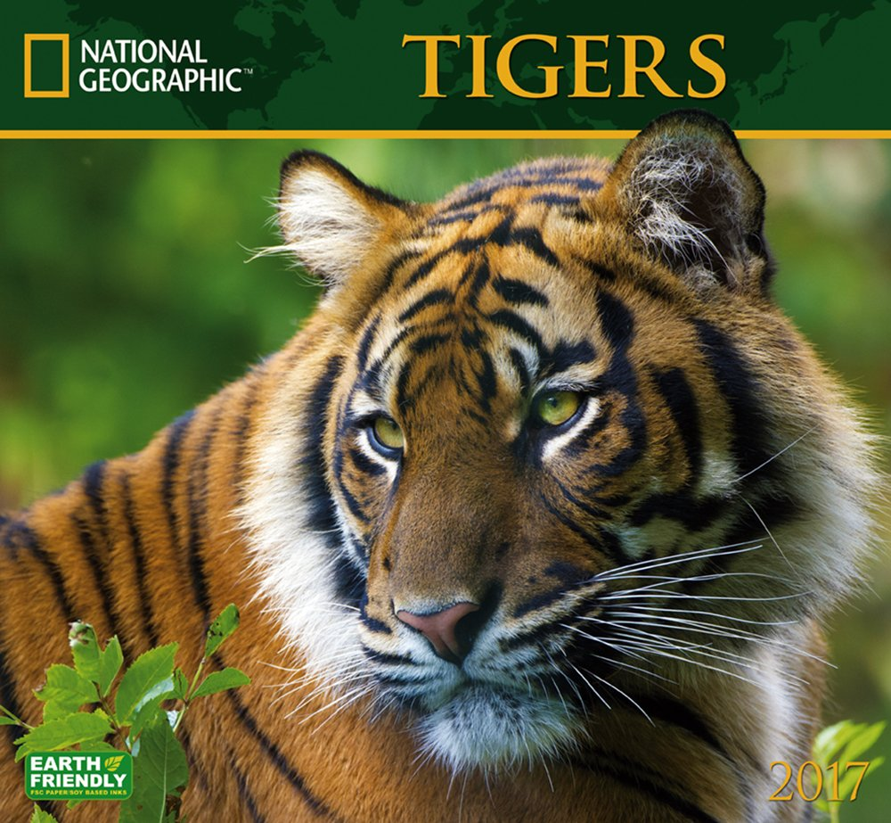 Amazon Com National Geographic Tigers 2017 Wall Calendar
