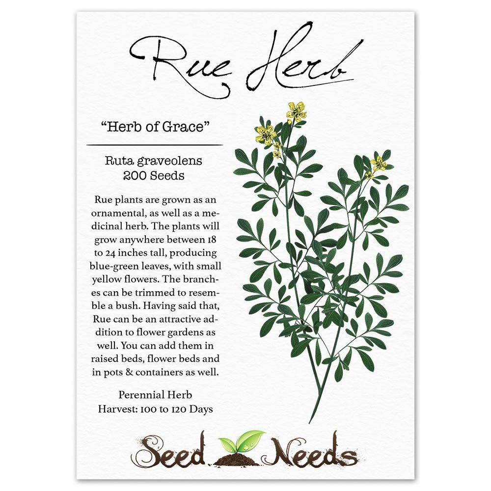 Amazon : Package Of 200 Seeds, Rue Herb (ruta Graveolens) Nongmo Seeds  By Seed Needs : Herb Plants : Patio, Lawn & Garden