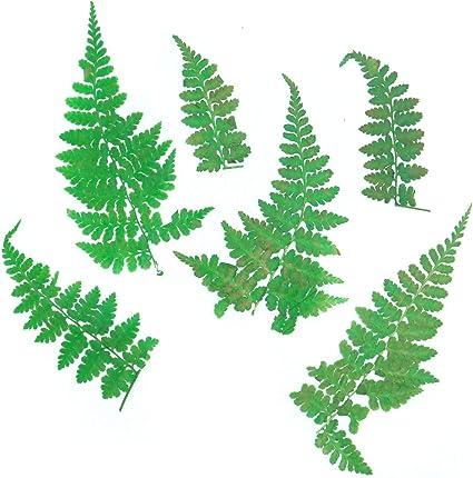 12x Pressed Dry Fern Leaves Dried Flowers DIY Phone Case Scrapbooking Crafts
