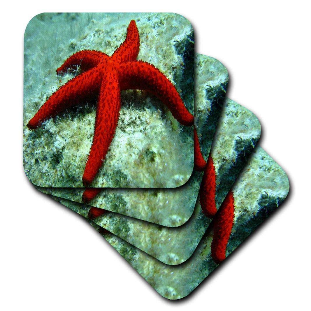 3drose Sea Lifeレッド星の魚 – 大きな赤いヒトデの画像の下部海 – コースター set-of-4-Soft レッド cst_256310_1 set-of-4-Soft  B074XS5PTN