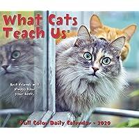 What Cats Teach Us 2020 Box Calendar