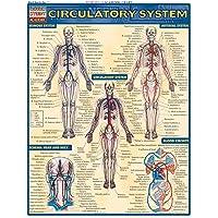 Circulatory System (Quick Study Academic)