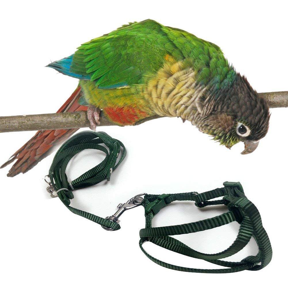 Pet Perroquet Sangle de Traction Corde en Plein air Pet Laisse réglable Harnais pour calopsitte Couleur aléatoire Lanlan
