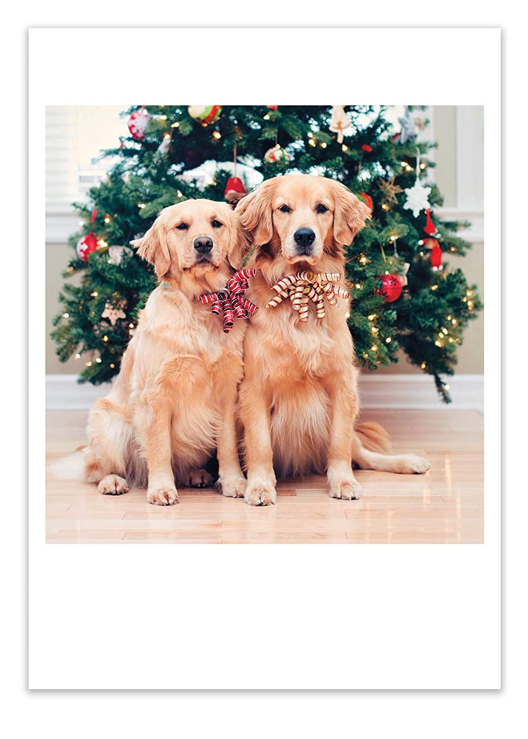 Amazon.com : 12 \'Two Dogs Xmas Trees\' Christmas Cards with Envelopes ...