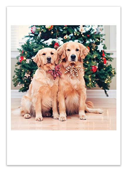 Amazon Com 12 Two Dogs Xmas Trees Christmas Cards With Envelopes