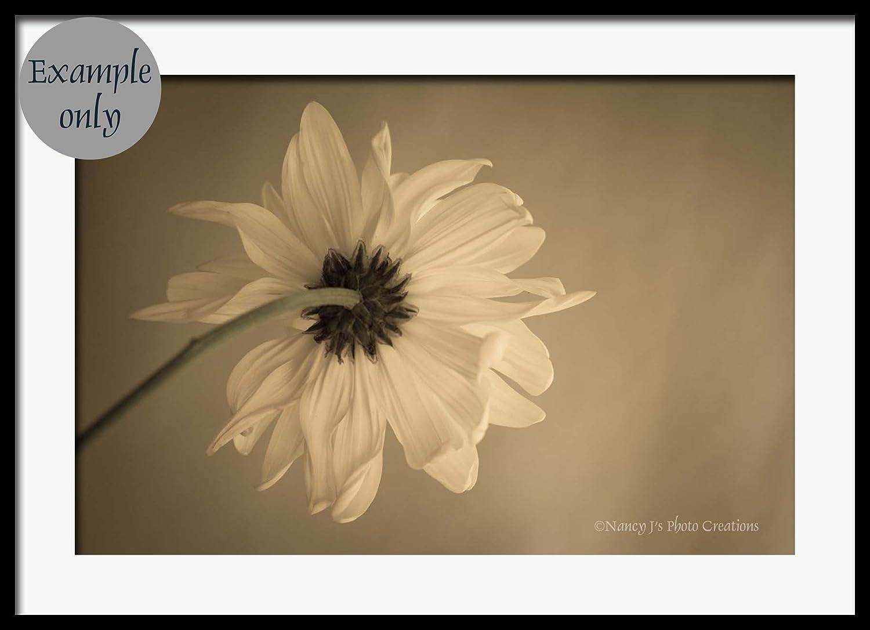 Amazon.com: Daisy Fine Art Still Life Floral Photography Black ...