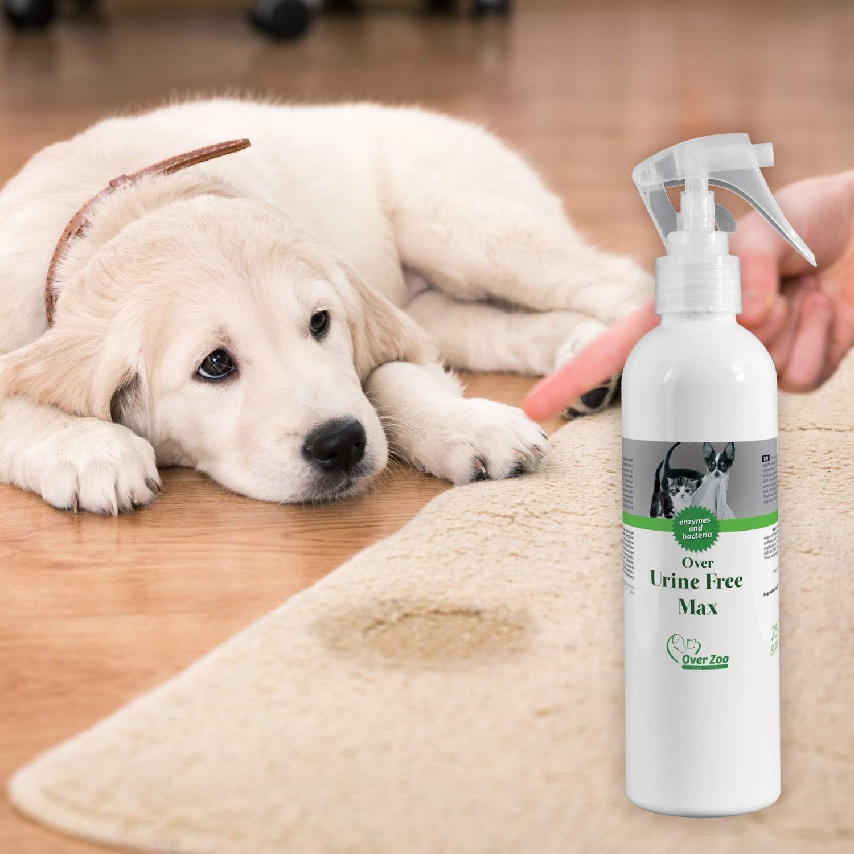 Over-Zoo orina - Quitamanchas - Limpieza contra orina Manchas en colchones, sofá o Alfombra - Spray de 250 ML Botella: Amazon.es: Productos para mascotas