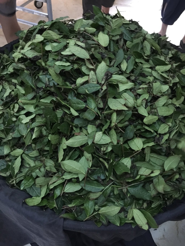 MeiMei Fine Teas Top Grade Anxi Floral Tie Guan Yin Oolong Tea - Iron Goddess of Mercy Chinese Loose Leaf Tea - Single Origin High Mountain Ecologically Grown - Energetic Very Fragrant (4 oz)