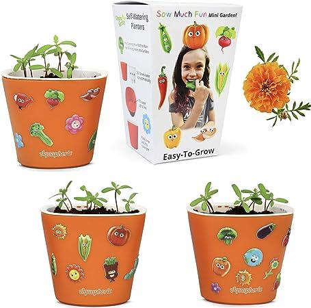 Amazon Com Window Garden Sow Much Fun Seed Starting Flower