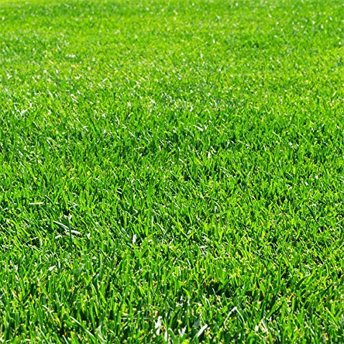 芝の種:トールフェスク普通種 原袋22.5kg入り[ゴルフ場のラフ法面緑化牧草に 芝生 1125平米分] B07BKMKJGV