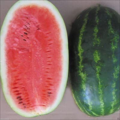 "Watermelon Seeds - 'All Sweet"" Citrullus lanatus ,Excellent heirloom variety. (25 Seeds): Kitchen & Dining"