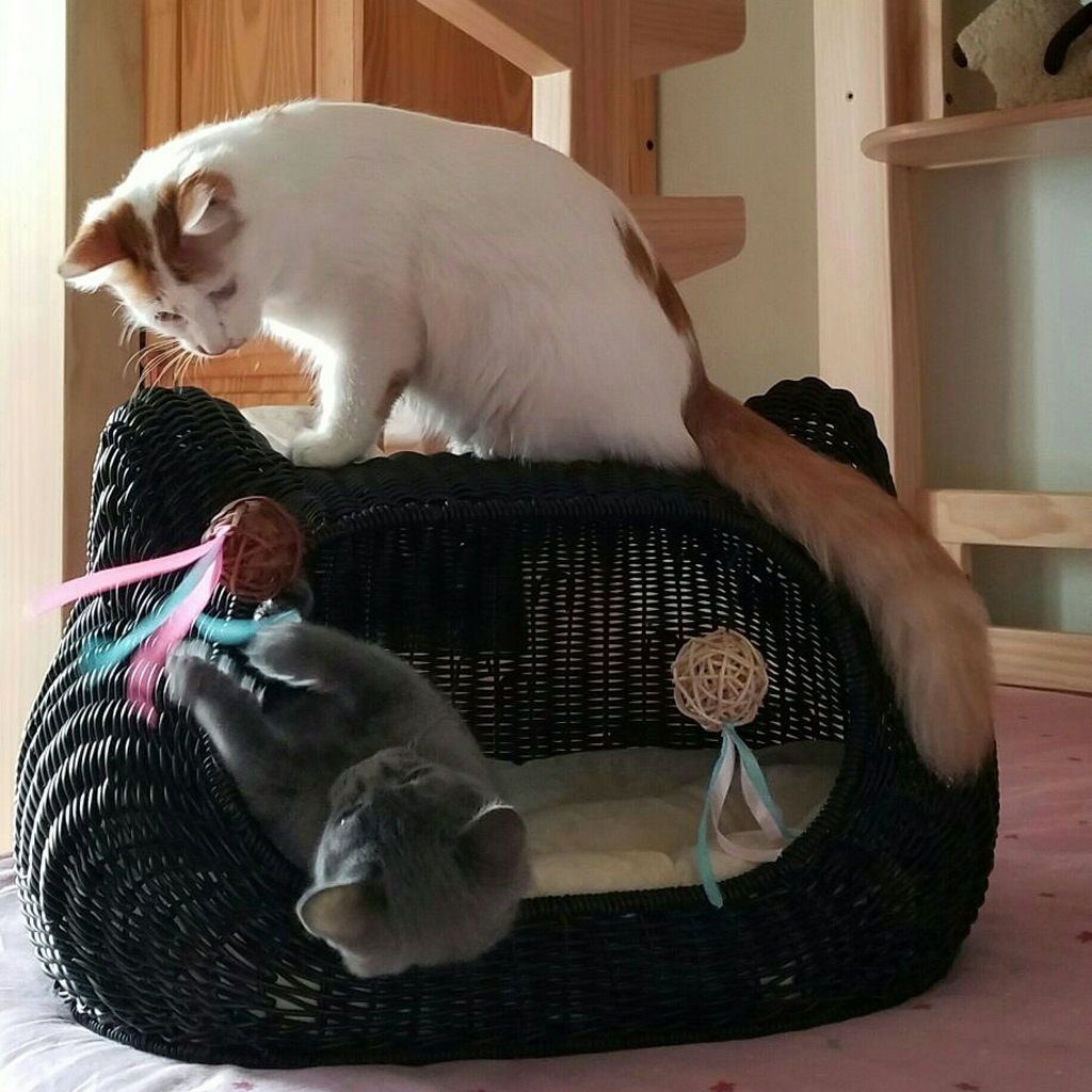 ZH Casa para Mascotas Cama para Mascotas Casa para nidos de Gatos Jaula para Gatos Perrera para Mascotas Perros para Mascotas Ratán /# (Color : Negro): ...