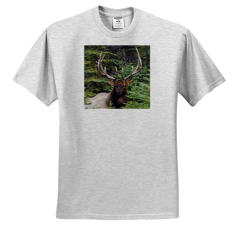 3dRose Danita Delimont Rocky Mountain Bull Elk Adult T-Shirt XL Elk ts/_313989