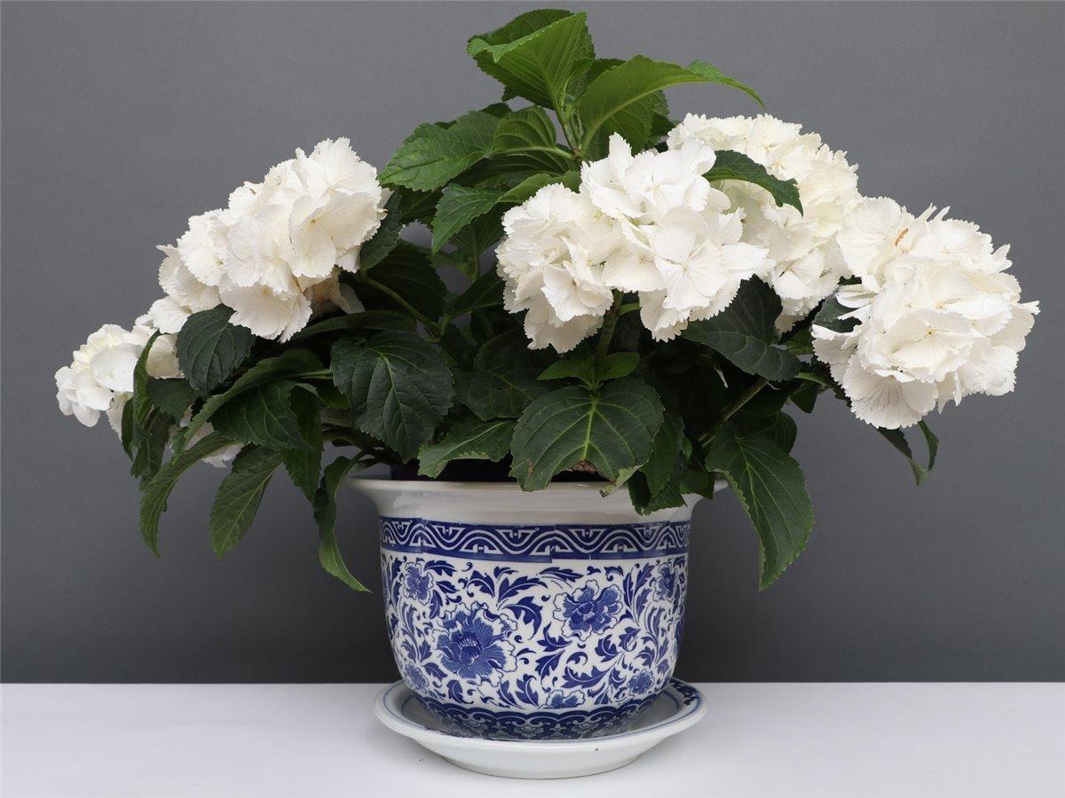 Blumentopf Blumenübertopf Pflanztopf Blau-Weiß Porzellan Ø 40cm  P0023-6