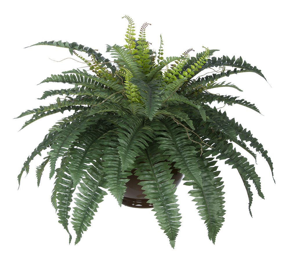 House-of-Silk-Flowers-Artificial-Fern-in-Brown-Fishbowl-Vase