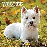West Highland White Terriers - Westies 2019 - 18-Monatskalender mit freier DogDays-App (Wall-Kalender)