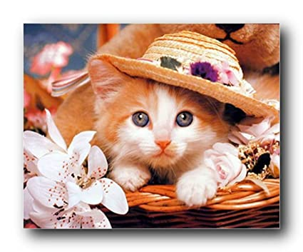 Amazon.com: Kitten in a Hat Cute Cat Animal Kids Room Wall Decor Art ...