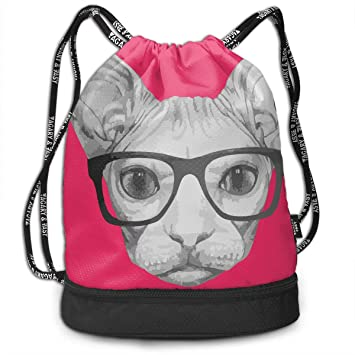 Amazon com | Portrait Of Sphynx Cat With Glasses Funny Cat