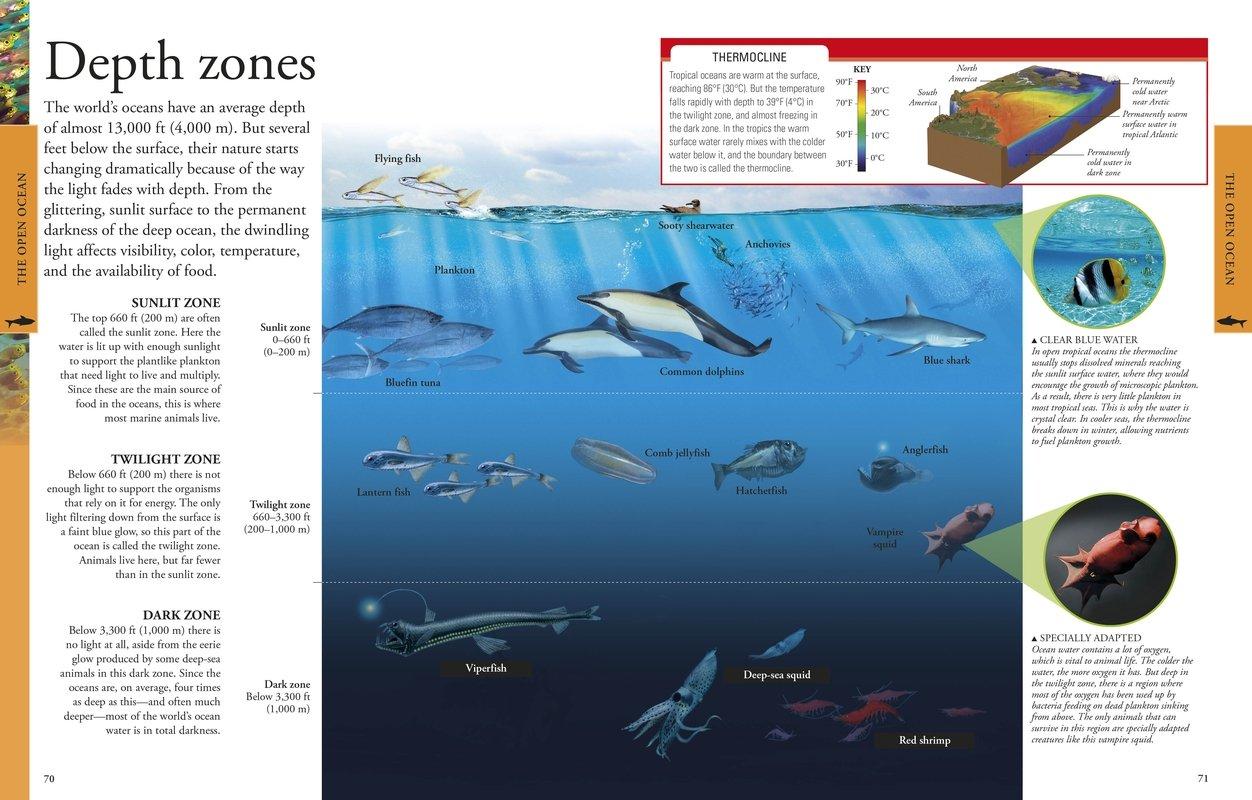 ocean a visual encyclopedia dk 0790778035945 amazon com books