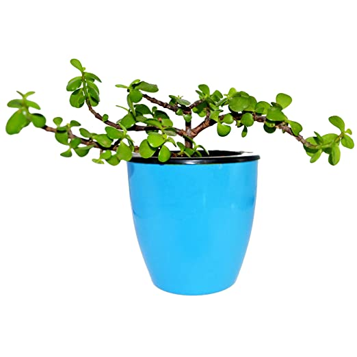 Eco365 4 Self Watering Decorative Pots (4 Pots)