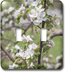 3dRose USA, Massachusetts, Bolton. Apple trees in bloom - Light Switch Covers (lsp_331555_2)