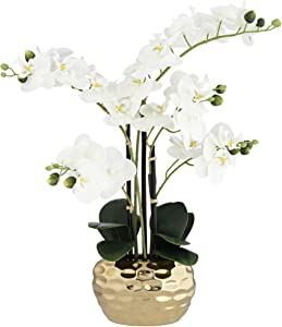 "Dahlia Studios White Phalaenopsis 23"" H Faux Orchid in Gold Ceramic Pot"