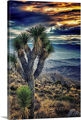 Joshua Tree Sunset Canvas Wall Art Print