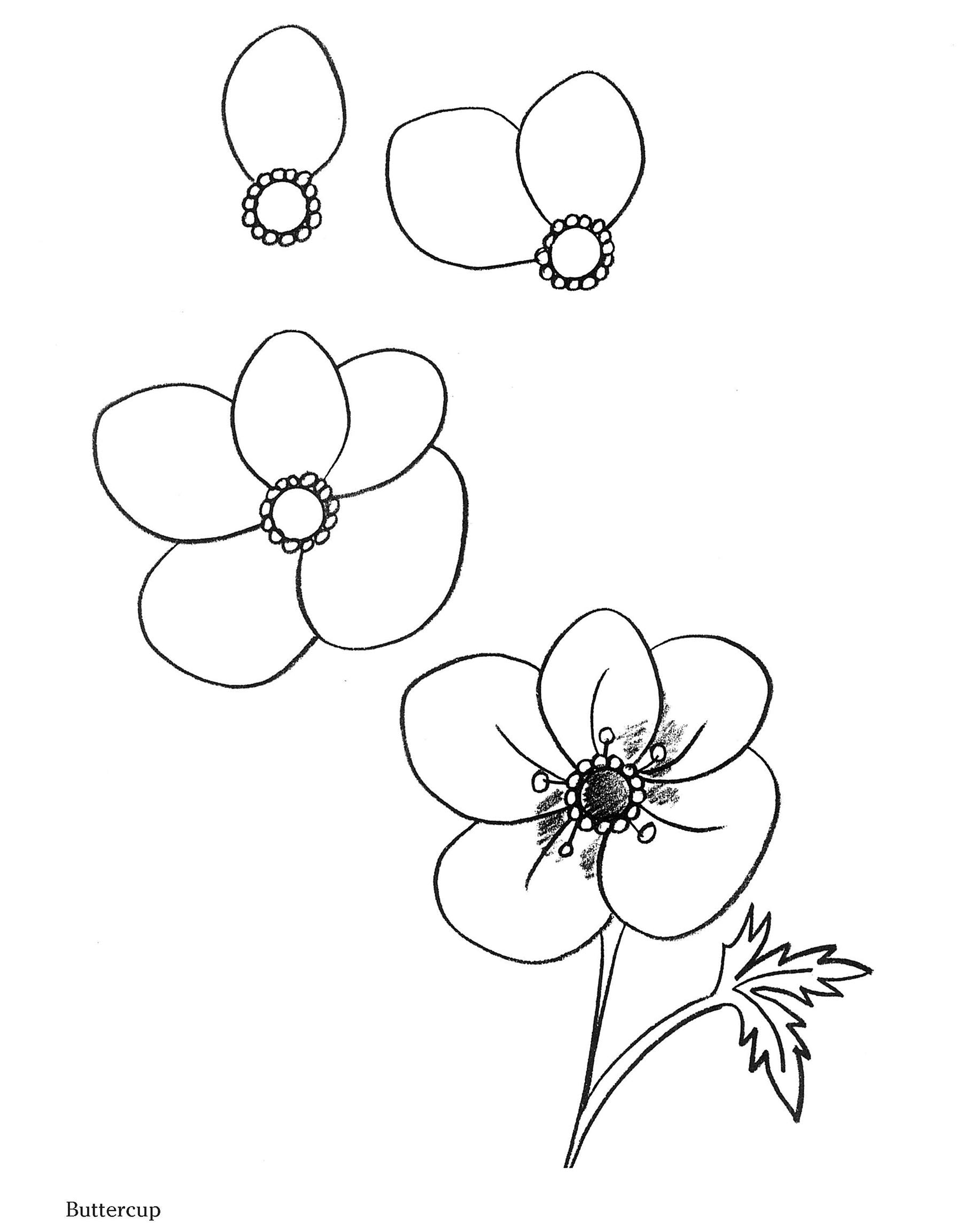 How to Draw Flowers (Dover How to Draw): Barbara Soloff Levy