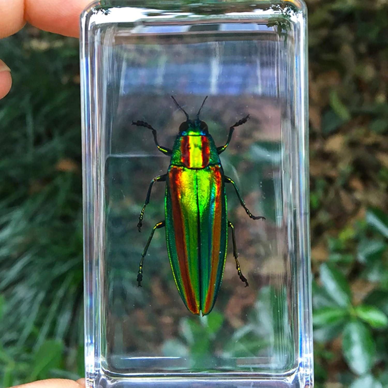 Espécimen de Insecto,Resina de Insectos,Adornos pequeños creativos Muestra de Insectos Reales Resina Juguete de observación de enseñanza para jardín de Infantes Araña Escarabajo,11 × 4,3 × 2,6 cm