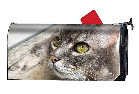 cfdebd5ea2d8 Amazon.com   Verna Christopher Home Animal Cats Stare Eye Four ...