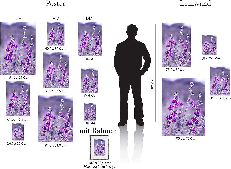 Postereck Poster 2834 Blumen- Feld Natur Bluete Pflanze lila pink Flora