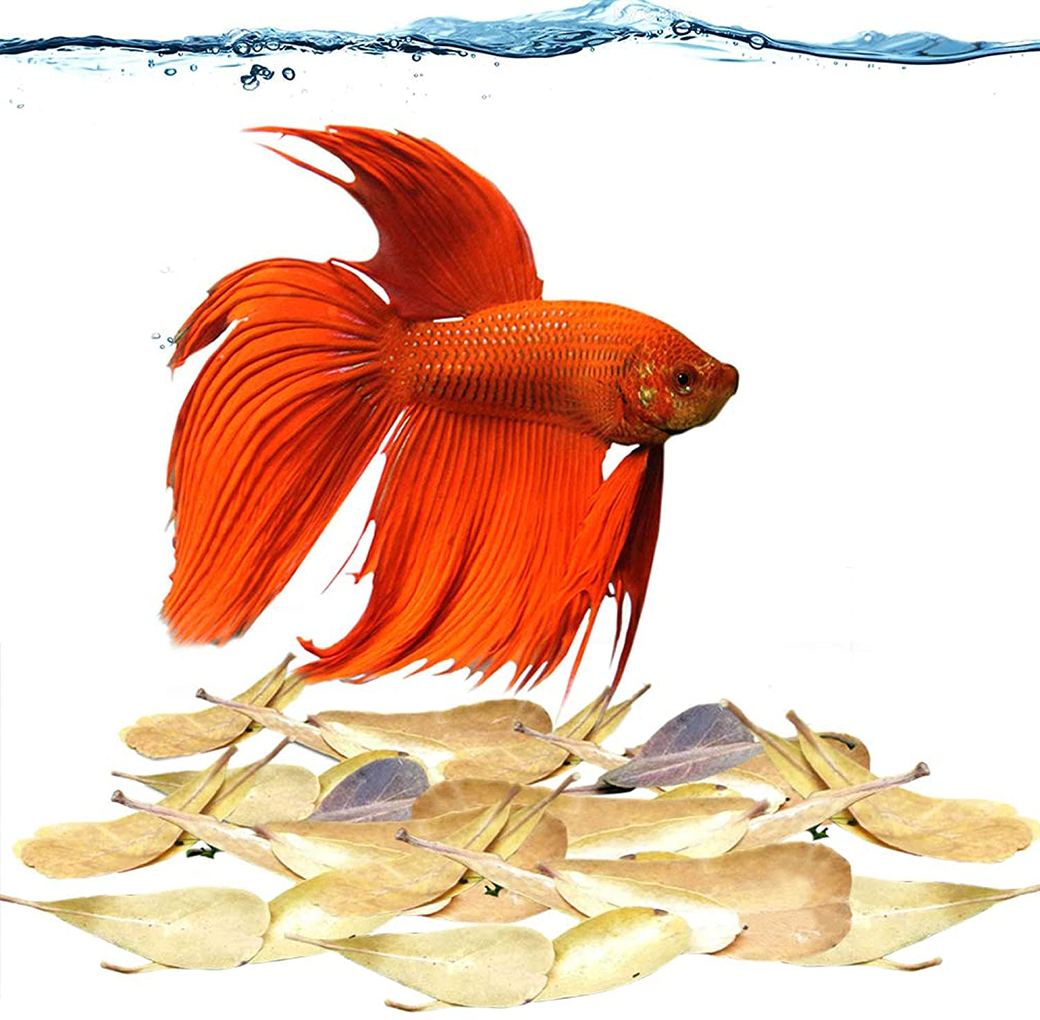 """SunGrow Fin Rot Leaves, Betta Medicine & Water Supplement, Keep Bettas Happy, Contains Beneficial Compounds, 2"""" (5cm) Long Indian Almond Leaves, 50 Leaves"""