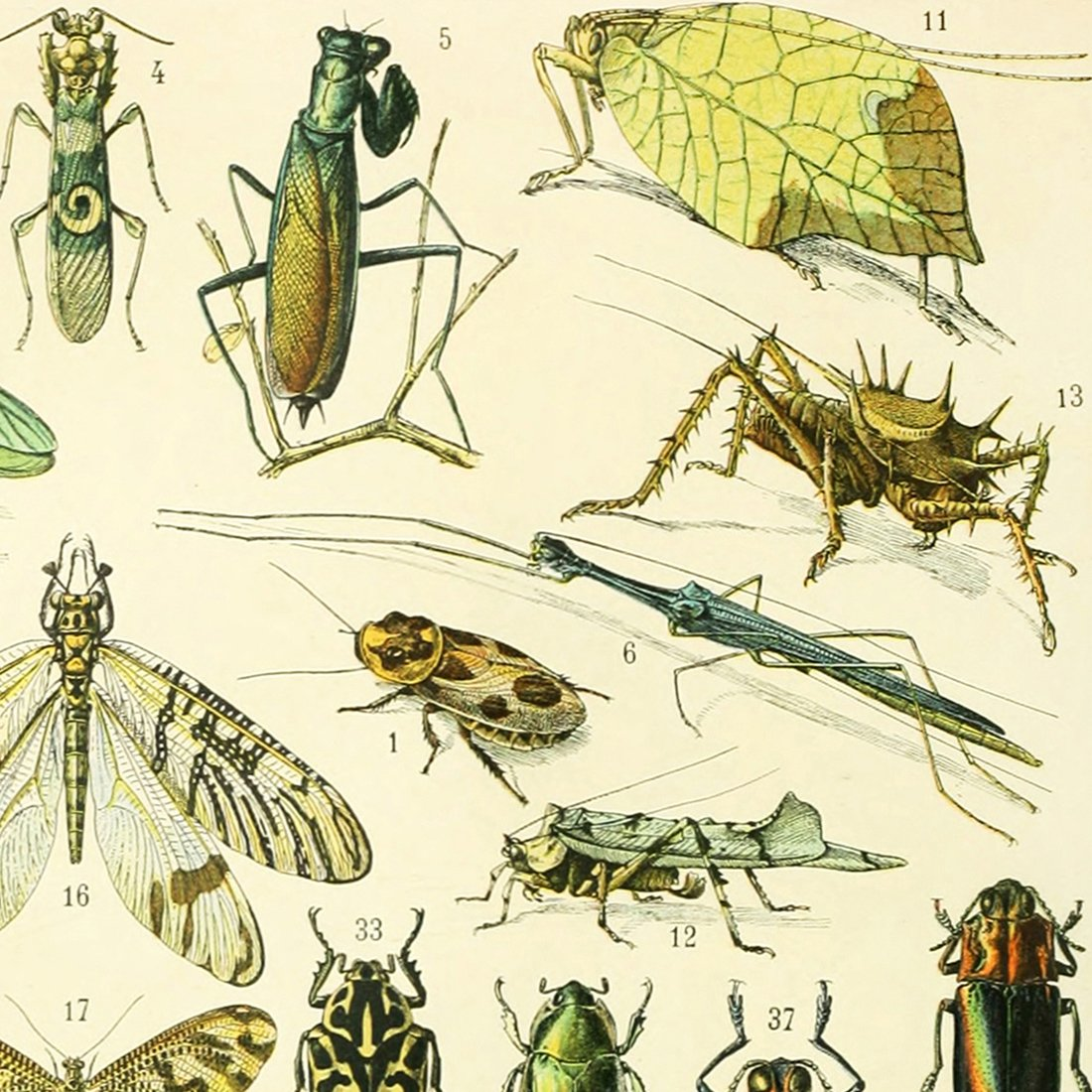 Cricket Insect Diagram Posters - All Kind Of Wiring Diagrams •