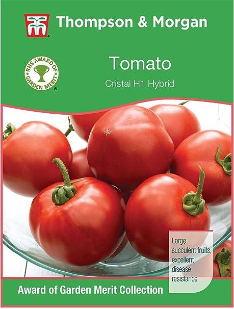 Thompson /& Morgan Vegetables 10 Seed Tomato Sungold F1 Hybrid
