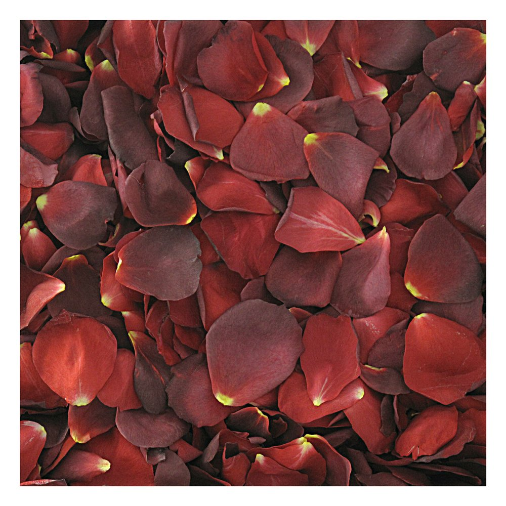 Hot Cocoa Rose Petals - 120 cups Rose Petals. Wedding Petals from Flyboy Naturals by Flyboy Naturals