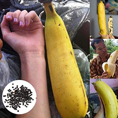 scgtpapadc Large Banana Seeds, 130Pcs Large Banana Seeds Garden Yard Plant Easy Growing Nutritious Fruit, Flower Seeds Plant Seeds Large Banana Seeds: Sports & Outdoors