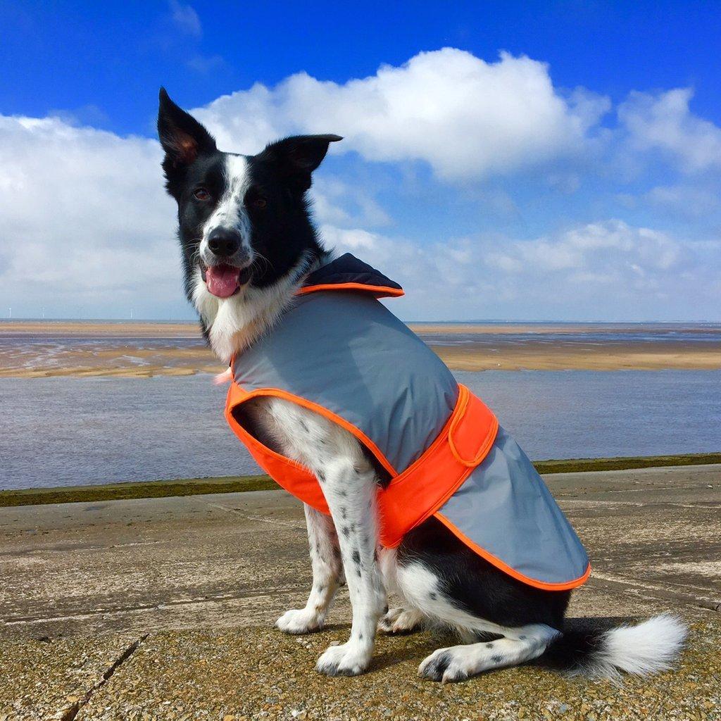 Equisafety Mercury Dog Coat (Small) (Red orange)