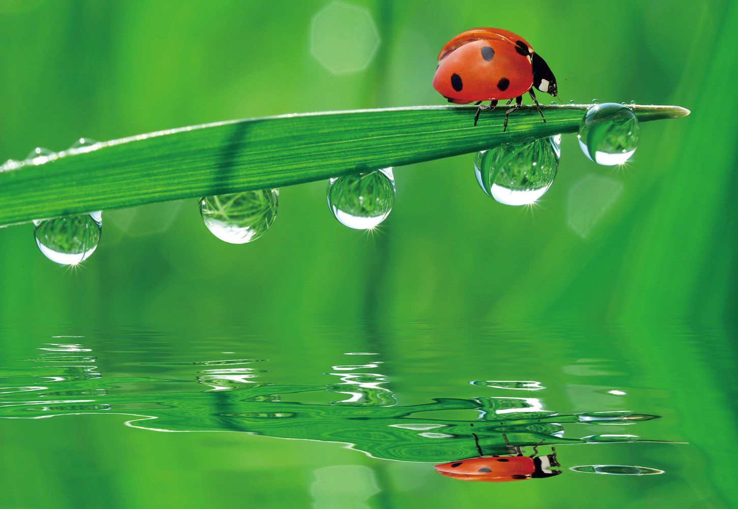 CHOIS Custom Films CF3301 Animal Ladybird Green Drops Glass Window Frosted DIY 4' W by 3' H