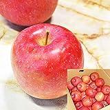 山形産 早生ふじ りんご 5kg 約12~20玉前後 訳あり ご家庭用