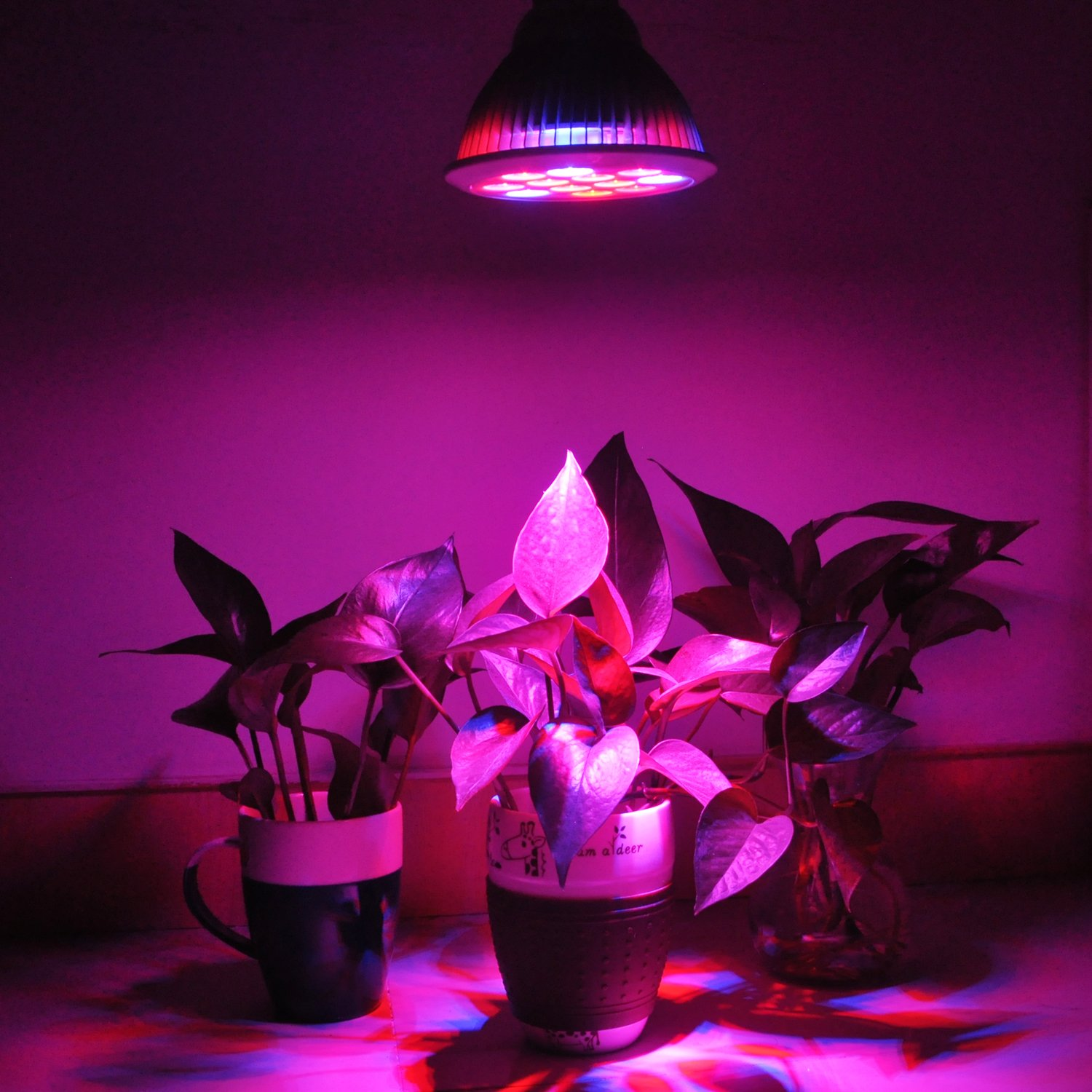 Amazon erligpowht led grow lights 24w plant lights e27 amazon erligpowht led grow lights 24w plant lights e27 growing bulbs 3 wavelengths tailored led grow lamps for garden greenhouse hydroponic and parisarafo Gallery