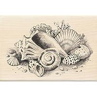"Inkadinkado Mounted Rubber Stamp, 2.75 by 4-"", Seashells Still Life"