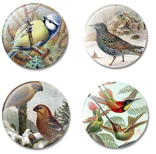Imán de arte pájaros en historia del arte, juego de 4 imanes para ...